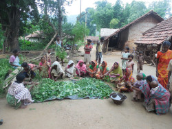 MKSP-Bio pesticide preparation at Dainmari village, Ghatsila block, Jharkhand.